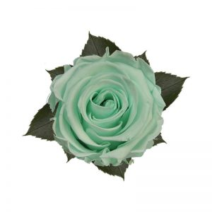 rose-stabilizzate-minty-green