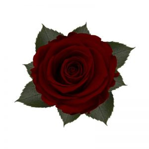 rose-stabilizzate-royal-red