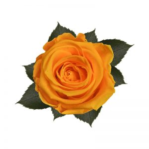 rose-stabilizzate-sunny-yellow