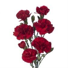 Garofanini rossi 50cm