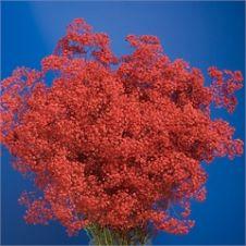 gypsophila dyed rosso