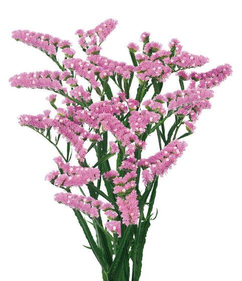 Statice – Semprevivo fiore Rosa 60cm