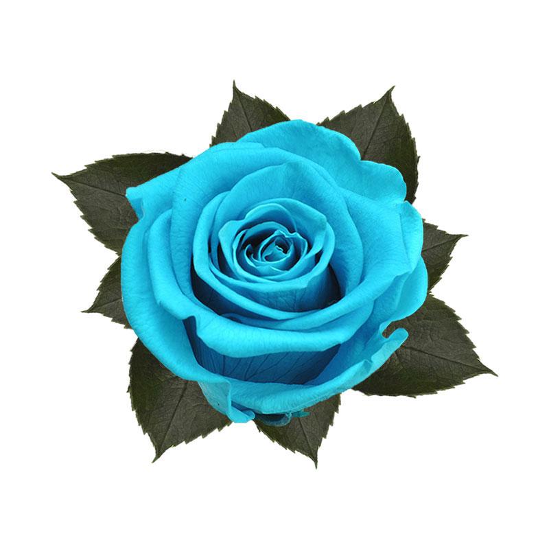 rose-stabilizzate-aquamarine