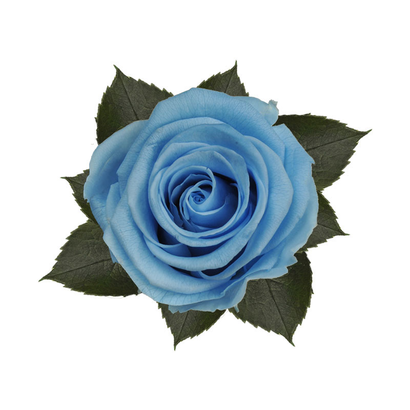 rose-stabilizzate-baby-blue