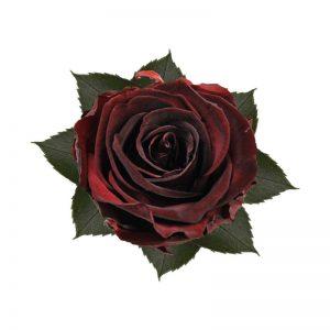 rose-stabilizzate-burgundy