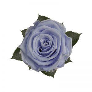 rose-stabilizzate-cool-lavender