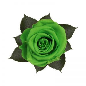 rose-stabilizzate-green-glow