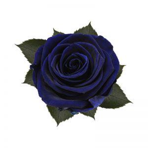 rose-stabilizzate-ocean-blue