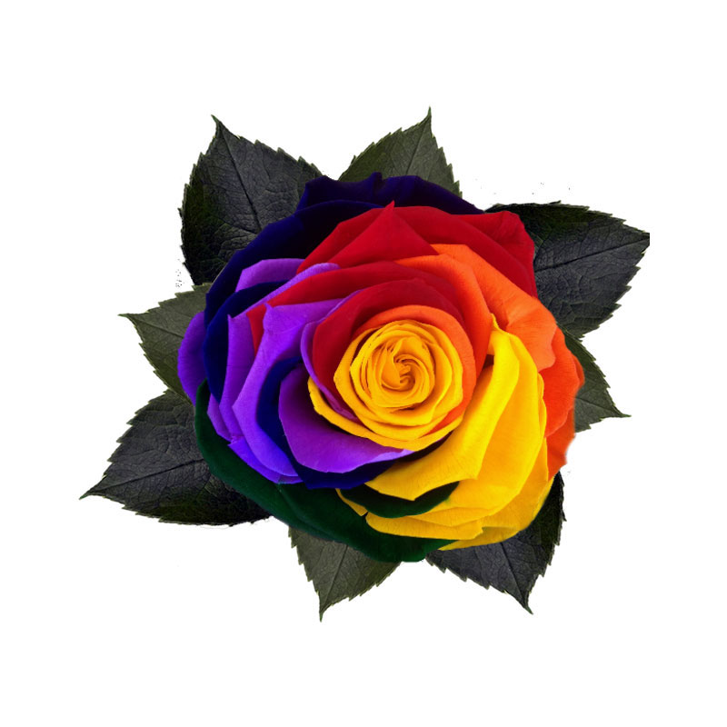 rose-stabilizzate-rainbow