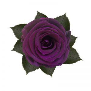 rose-stabilizzate-velvet-plum