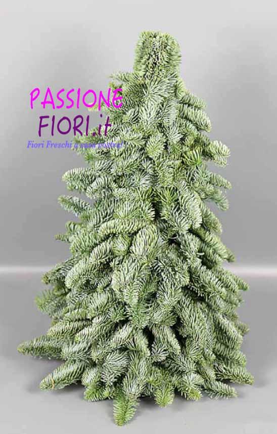 Albero Di Natale 40cm.Albero Abete Normandiano Nobilis Vero 40cm Passionefiori It Fiori Freschi A Casa Tua