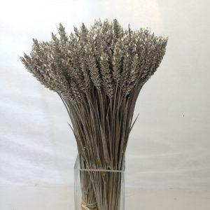 spighe-di-grano-colorate-argento-min