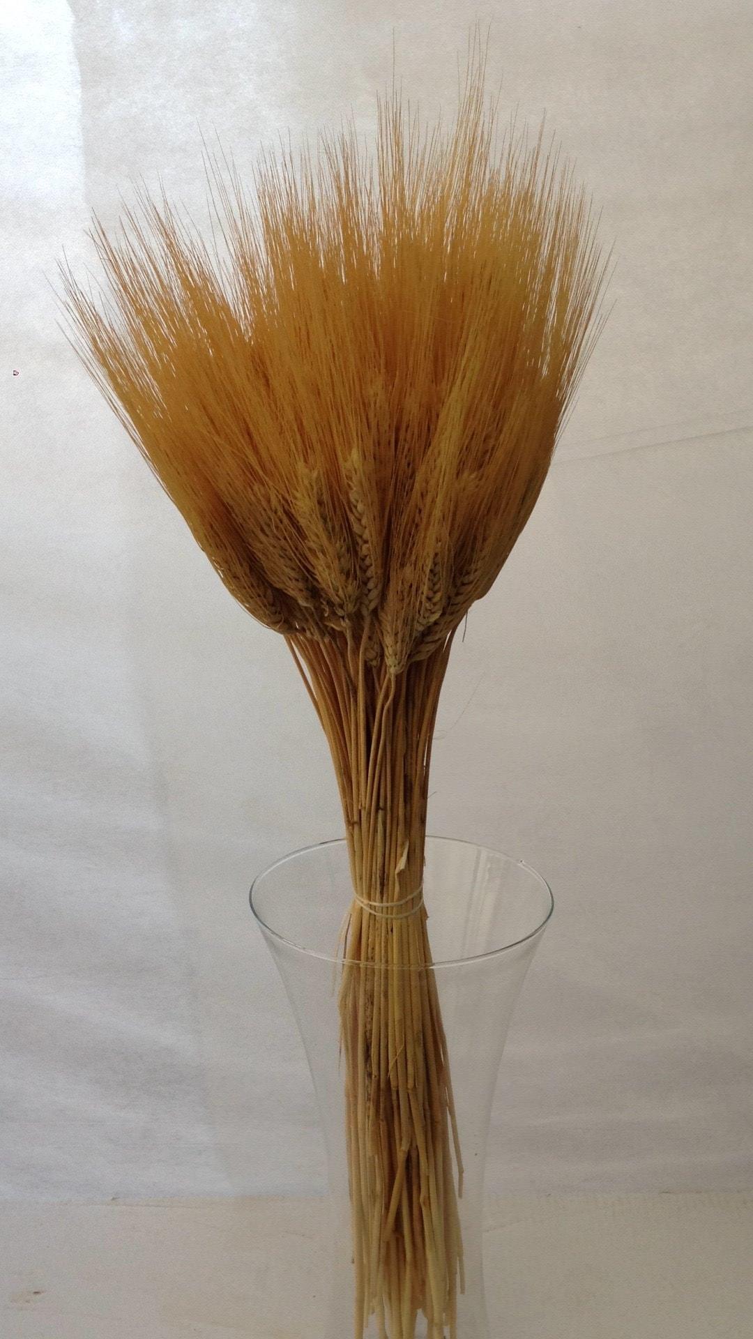 spighe-di-grano-naturali-100-min