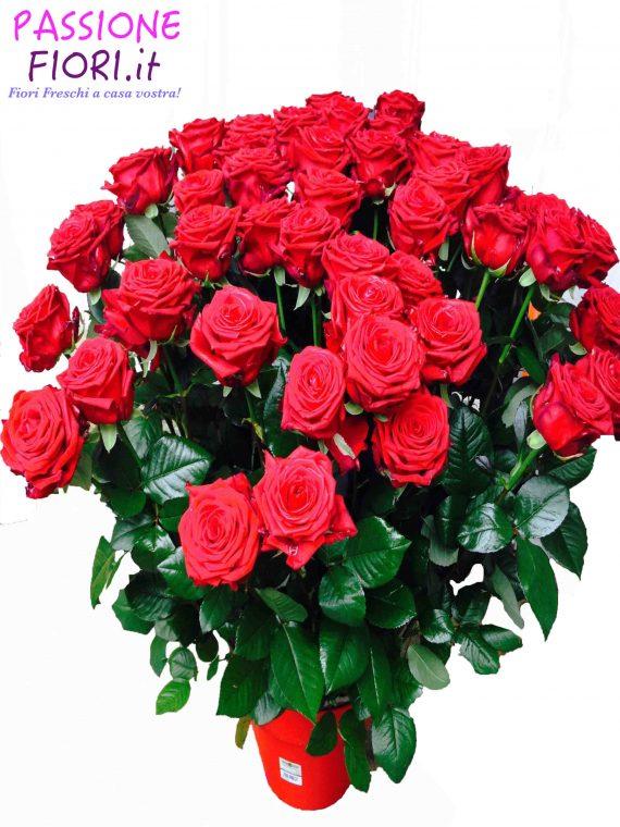 fascio 50 rose rosse
