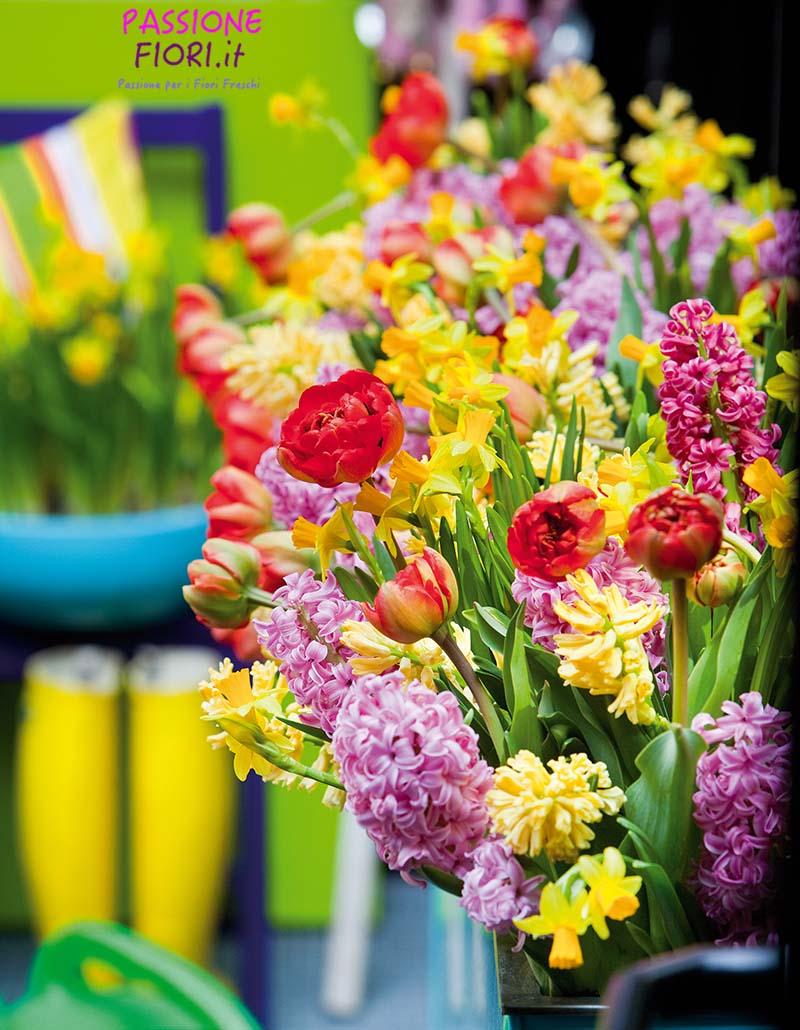 A Gennaio ci rallegriamo con i Tulipani