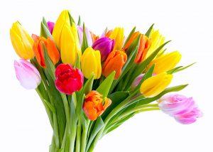 bouquet 20 tulipani