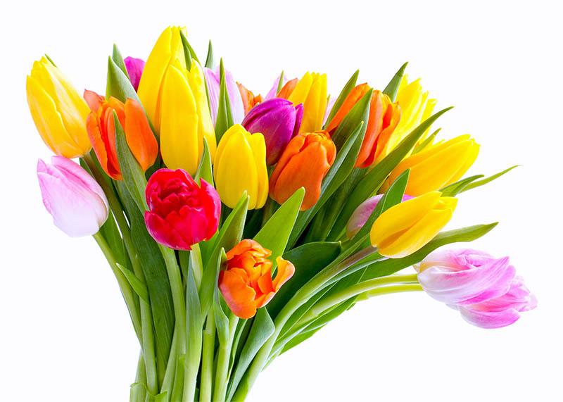 Fiori Tulipani.Bouquet 20 Tulipani Passionefiori It Fiori Freschi A Casa Tua