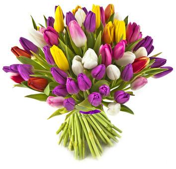 Fiori Tulipani.Bouquet 50 Tulipani Passionefiori It Fiori Freschi A Casa Tua