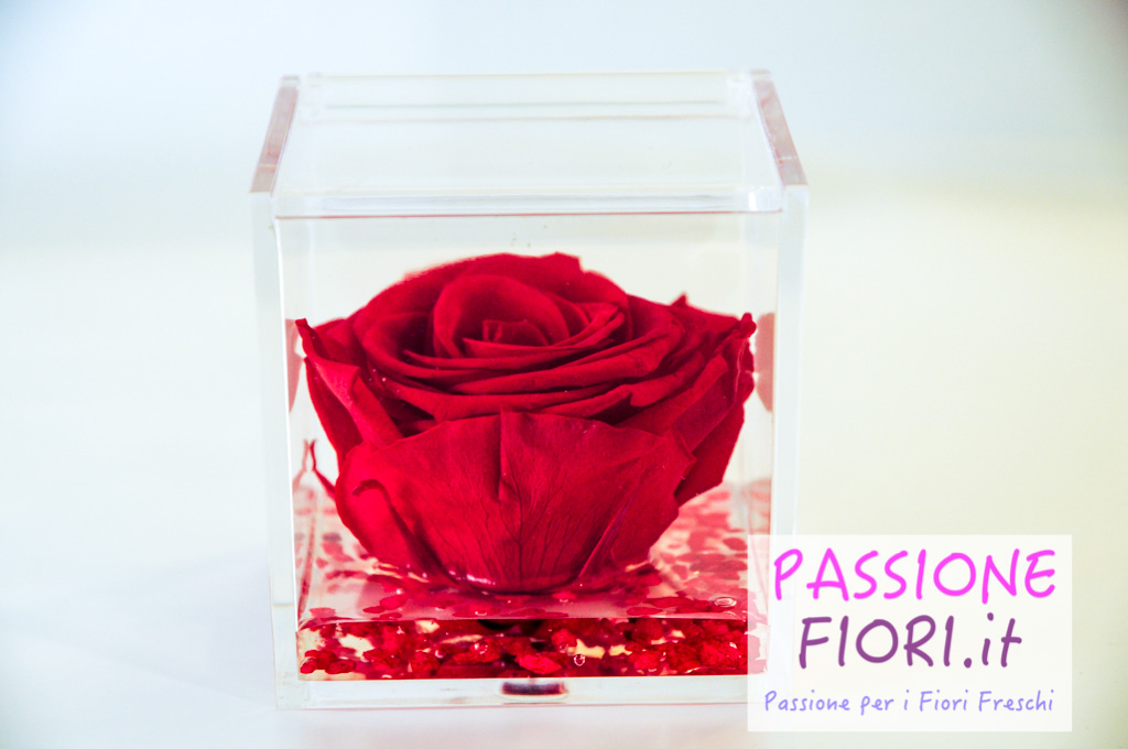 rose stabilizzate 8 (3 di 18)