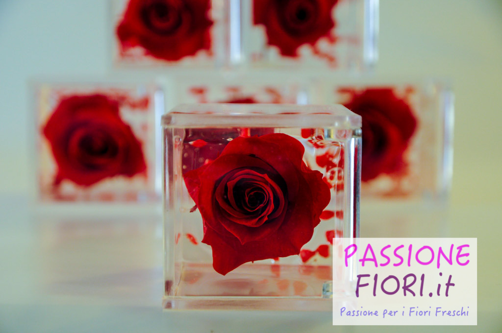 rose stabilizzate cubo passionefiori (23 di 53)