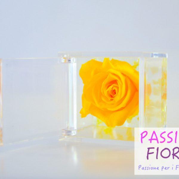 rose stabilizzate cubo passionefiori (26 di 53)