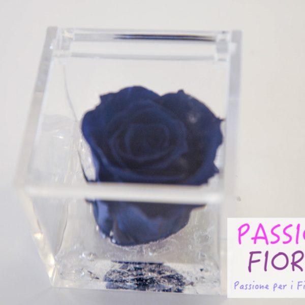 rose stabilizzate cubo passionefiori (43 di 53)