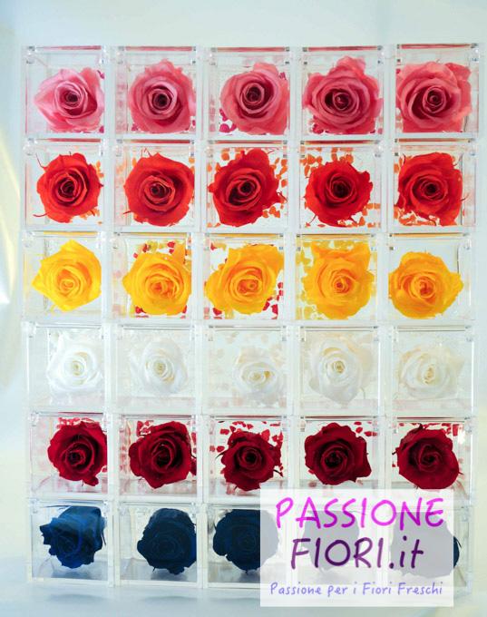rose stabilizzate cubo passionefiori (49 di 53)