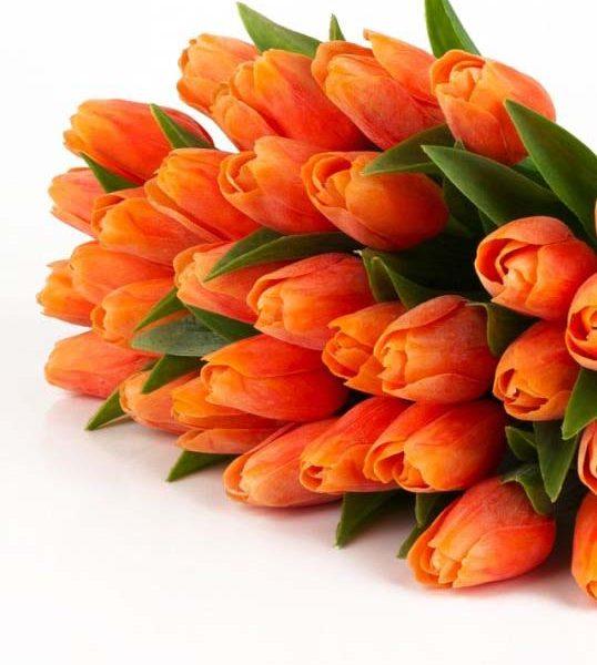 Tulipani arancioni vendita fiori freschi recisi online for Tulipani arancioni