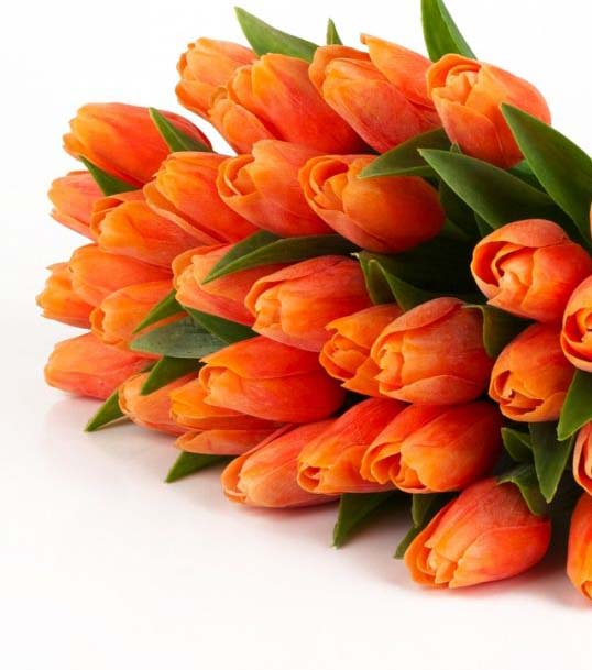 Fiori Arancioni.Tulipani Arancioni Vendita Fiori Freschi Recisi Online Mazzo Di