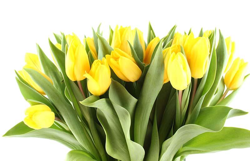 Mazzo Di Fiori Tulipani Costo.Tulipani Gialli Vendita Fiori Freschi Recisi Online Mazzo Di