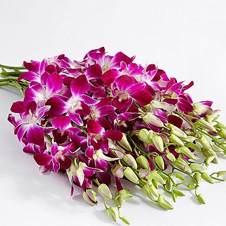 Mazzo Di Fiori Orchidee.Dendrobium Viola Orchidea Passionefiori It Fiori Freschi A
