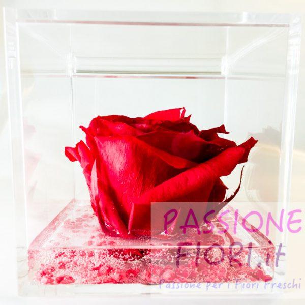 cubo Rosa stabilizzata maxi 10×10 (9 di 14)