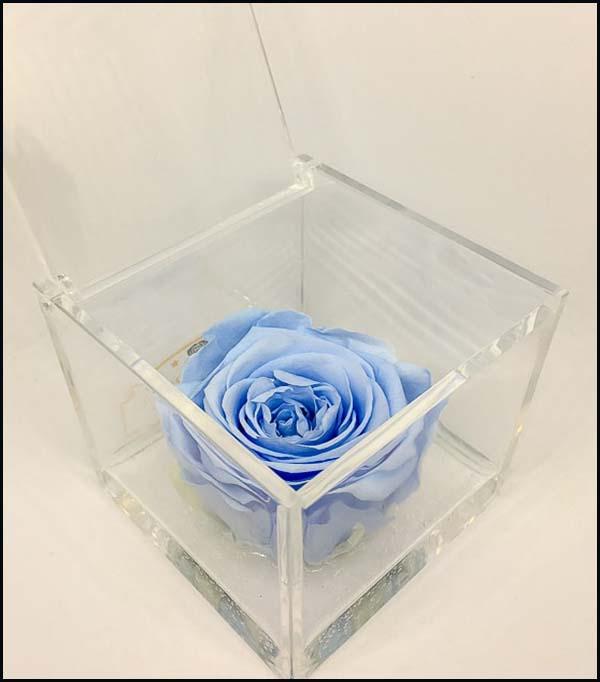 Cubo Rosa stabilizzata Azzurra 8x8 CUBEROSE