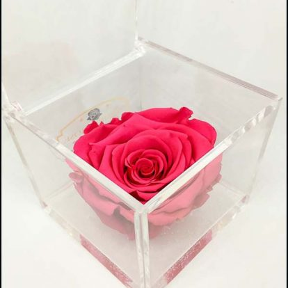 Cubo Rosa stabilizzata maxi Fucsia 10x10x10