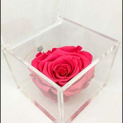 Cubo plexiglass Rosa stabilizzata Fucsia 8x8x8