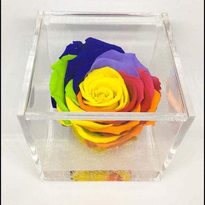Cubo Rosa stabilizzata Multicolor Rainbow 8x8