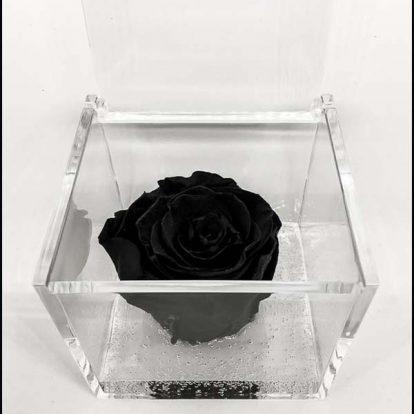 Cubo plexiglass Rosa stabilizzata Nera 8x8x8