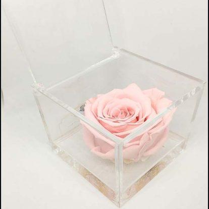 Cubo Rosa stabilizzata Rosa 8x8