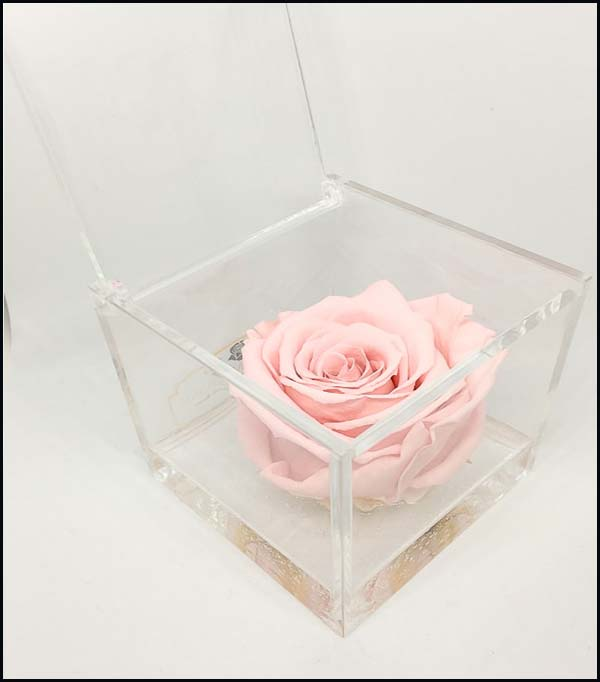 Cubo Rosa stabilizzata maxi rosa 10x10