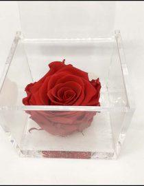 Cubo Rosa stabilizzata maxi Rossa 10x10