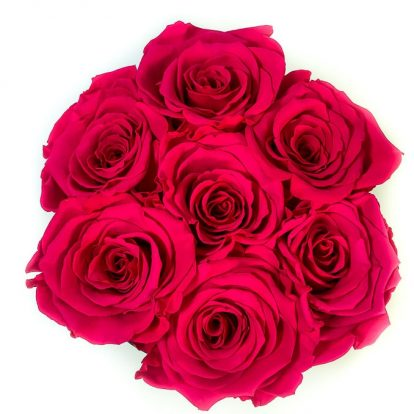 Scatola Tonda, Cilindro in Velluto 7 Rose stabilizzate Fucsia