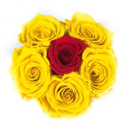 Scatola Tonda, Cilindro in Velluto 7 Rose stabilizzate Gialla e rossa