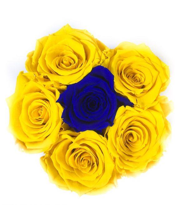 Scatola Tonda, Cilindro in Velluto 7 Rose stabilizzate Gialla e blu
