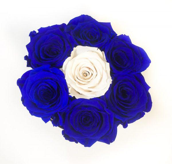 Scatola Tonda, Cilindro in Velluto 7 Rose stabilizzate Blu e Bianco