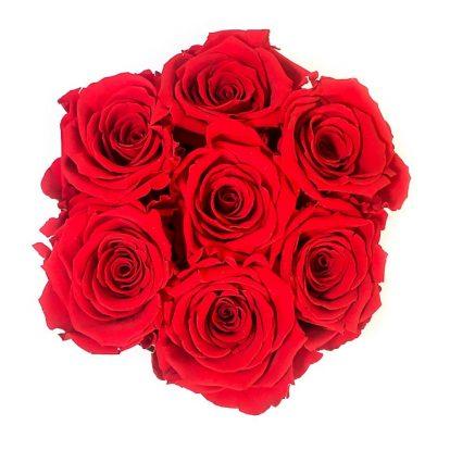 Scatola Tonda, Cilindro in Velluto 7 Rose stabilizzate Rossa